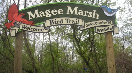 Miraculous magical Magee Marsh.