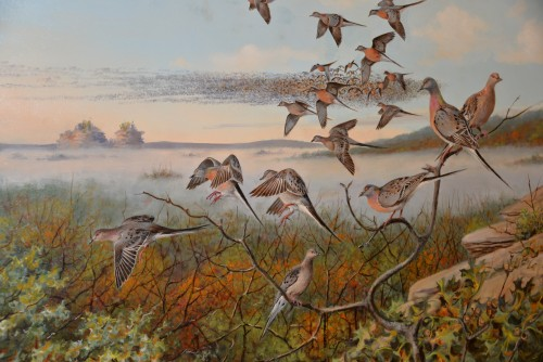 Passenger pigeon's by Wisconsin's own Owen Gromme.