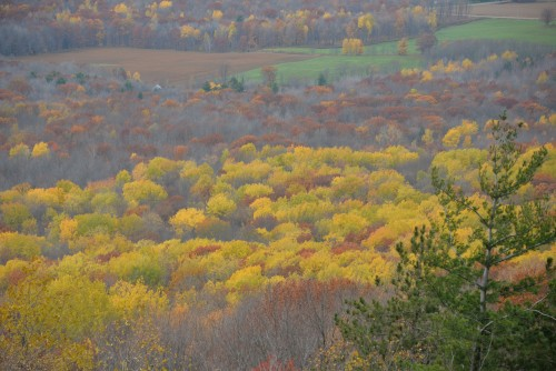 Fall colors of Wisconsin.
