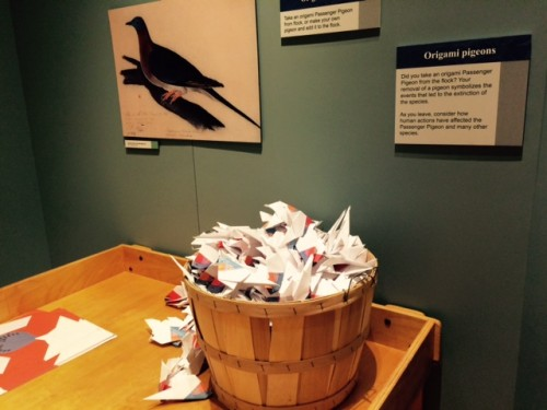 Passenger pigeon display at Ball State U.