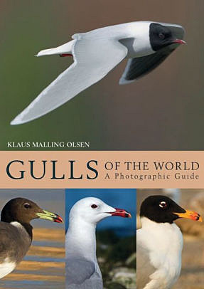 guide back for gulls