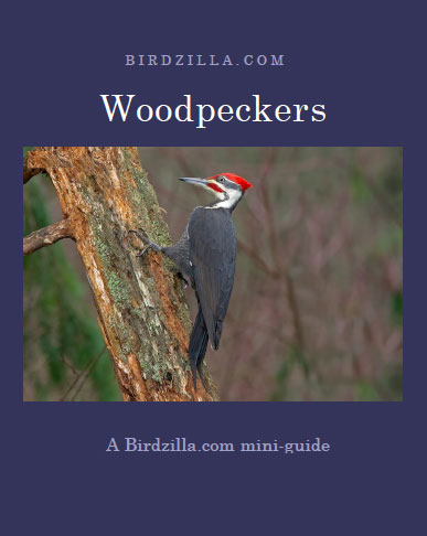 woodpecker guide