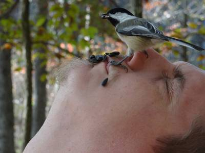 b2ap3_thumbnail_Chickadee-feeder-face-Wayne-Hoch-Warren.jpg