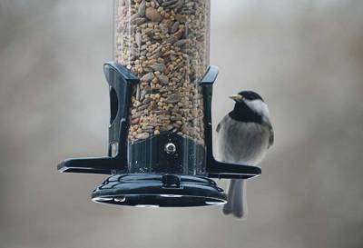 b2ap3_thumbnail_Chickadee-on-tube2.jpg