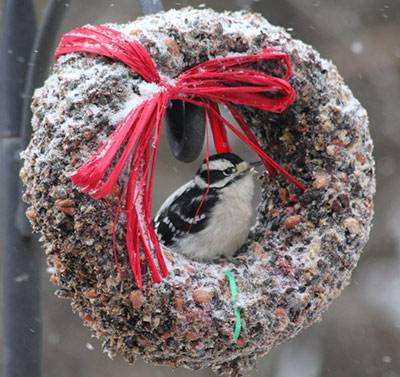 b2ap3_thumbnail_Downy-woodpecker-in-wreath.jpg