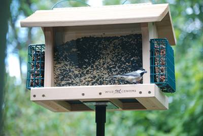 b2ap3_thumbnail_Hopper-bird-feeder-with-suet-holder.jpg