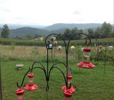 b2ap3_thumbnail_Hummingbird-station-Angela-Hall-KY.jpg