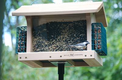 b2ap3_thumbnail_bird-feeder-with-suet-holder.jpg