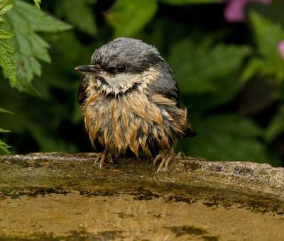 b2ap3_thumbnail_chickadee-on-birdbath.jpg