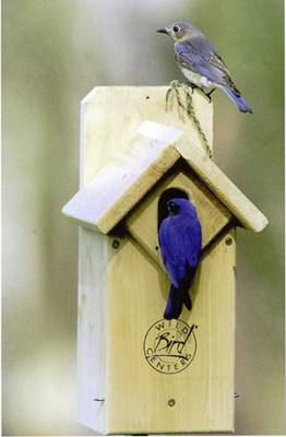 b2ap3_thumbnail_eastern-bluebirds.jpg