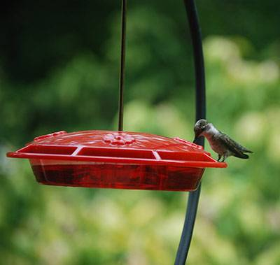 b2ap3_thumbnail_humming-bird-by-Kristin.jpg