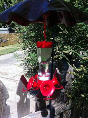 b2ap3_thumbnail_hummingbird-feeder-umbrella.jpg