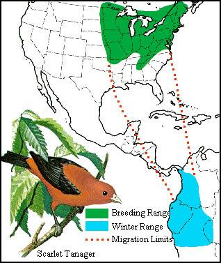 b2ap3_thumbnail_scarlet-tanager-migration-map.jpg