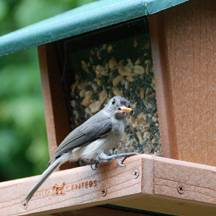 b2ap3_thumbnail_tufted-titmouse.jpg