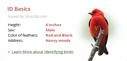 basics of bird identification