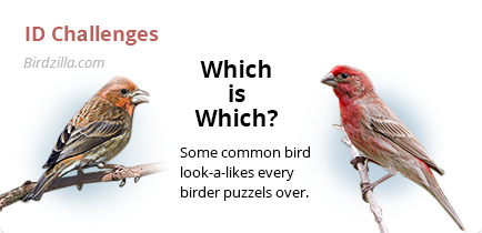 bird id challenges