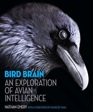 bird brain - the book