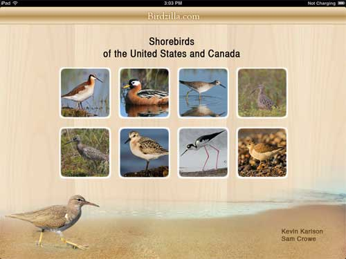 shorebirds app