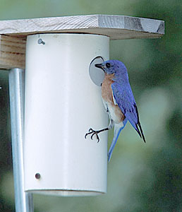Nestbox Plans - North American Bluebird Society