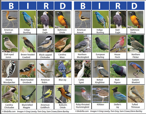 Each bird in the game is included in the Flash Card set above.