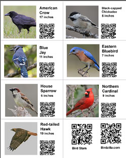 Free Bird Education Tools for Teachers