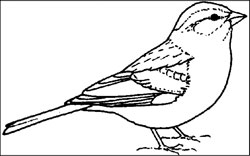 Bird Coloring Pages Free Education Tools For Teachers Arkansas State