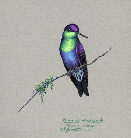 tony bennett bird art