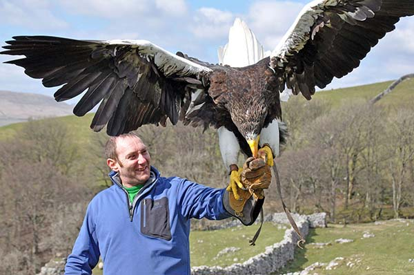 Stellers Sea Eagle with Man