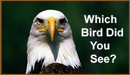 Identifying birds which bird did you see